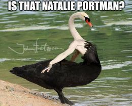 Natalie portman memes
