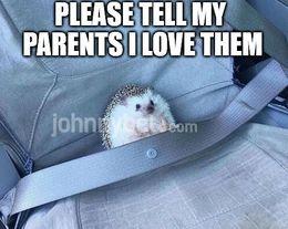 My parents memes